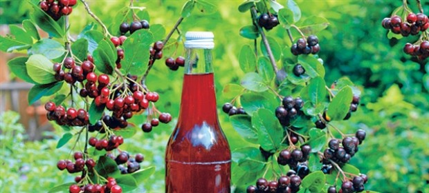 aronija aronix jagode in sokovi ter izdelki iz aronije sadike